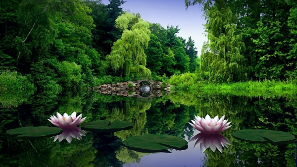 water_lilies_water_leaves_pond_bridge_trees_beauty_green_nature_30352_3840x2160