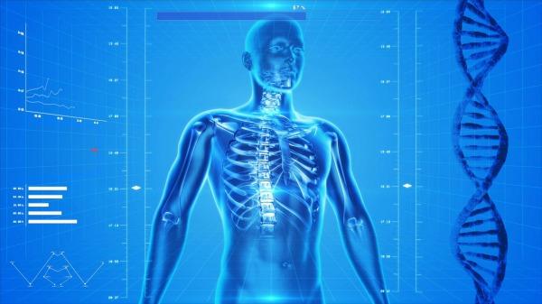 human-skeleton-163715