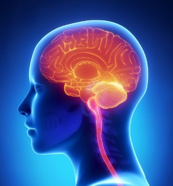 the-brain-930x1002